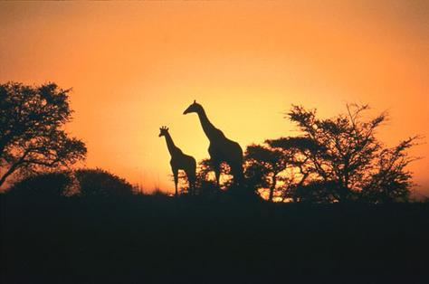 south-africa-sunset-southafrica